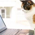 Cat staring laptop computer screen